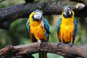 Papageienvögel foto