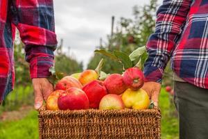 Satz Äpfel auf See Konstanz Deutschland foto