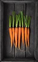 frische junge Karotten foto
