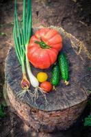 hausgemachtes Gemüse im Garten foto