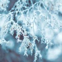 Winterhintergrund