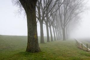 Reihe blattloser Bäume neben einem Deich