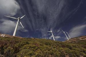 Reihe von Windkraftanlagen zwischen grünen Büschen