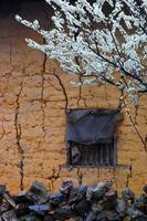 Landschaft mit Pfirsichblumen und alten Häusern foto