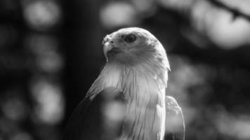 Adler und Wolken foto