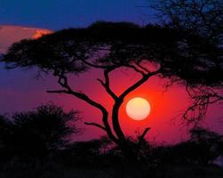 Akazien Sonnenuntergang