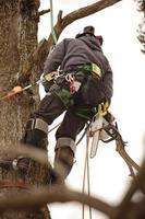 Baumpfleger Kletterbaum foto