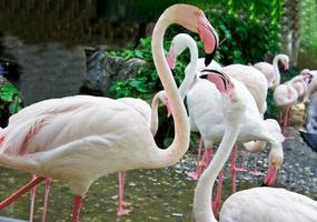 schönes Nahaufnahmeporträt des weißen Flamingos