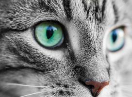 Kitty Katze foto