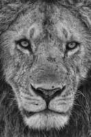 Porträt des Königs foto