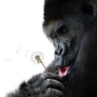 niedliches Tierporträt eines Affen, der einen Wunsch macht foto