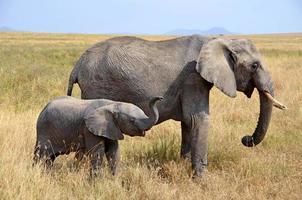 Elefantenbaby mit Mutter, die im Gras steht