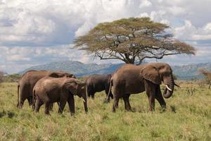 Elefantenherde Ostafrika zu Fuß