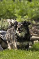 mischlingshund im garten auf der wiese
