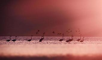 Flamingos im Sonnenlicht.
