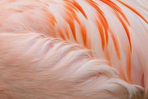 Flamingo abstrakt