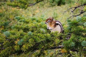 kleiner Streifenhörnchen, der auf einem grünen Baum sitzt