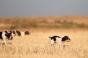 Jagd foto