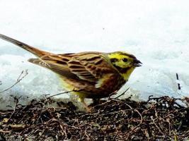 steile Vögel foto