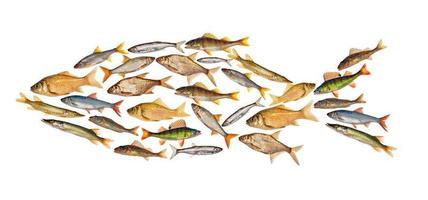 zusammengesetzter Süßwasserfisch isoliert auf Weiß foto