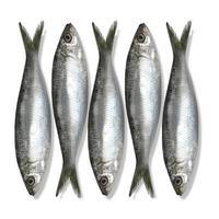 Fische foto