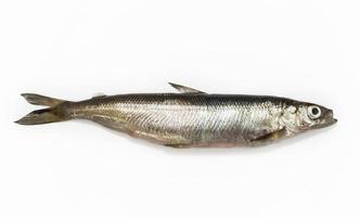 Fisch foto