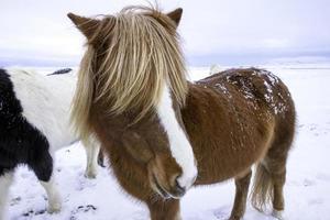 schlägt auf ein Pferd