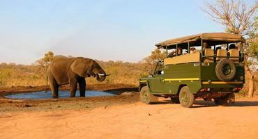 Safari-Fahrzeug und Elefant