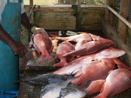 Fischer, der den Tagesfang säubert foto