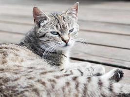 getigerte Katze, die auf einem Holz liegt und zusieht, weiche Farben