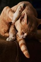 Katze foto