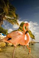 zwei Flamingos, die an einem Strand in Aruba stehen