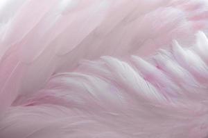 Federn eines Flamingos