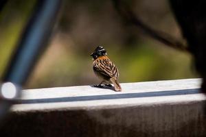 Colca Canyon: kleiner Vogel foto