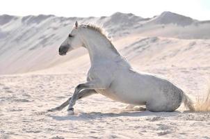 Pferdetraum foto