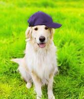 Golden Retriever Hund in der Kappe, die auf dem grünen Gras sitzt