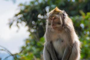 geduldiger Affe wartet foto