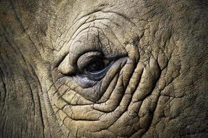 Auge des Tieres mit Fokus auf das Auge foto