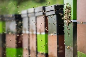 Honigbienen bei der Arbeit, die um ihre bunten Bienenstöcke fliegen foto