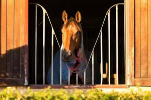 Pferd schaut durch das Fenster foto