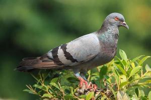 Tauben stehen auf der Baumkrone foto