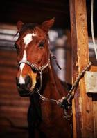 wunderschönes Pferd foto