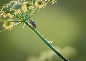 Nahaufnahme des Käfers, der auf Pflanze sitzt foto