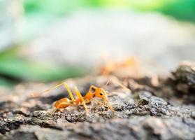 Ameise in der kleinen Welt foto