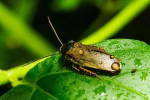 Insekt auf grünem Blatt foto