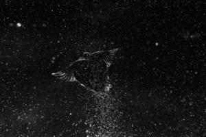 Stockentenkonstellation foto