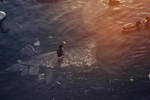 Enten und Schwäne an einem See foto