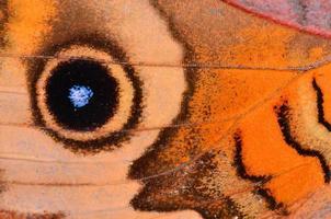 Makro des Augenflecks des Pfauenschmetterlingsflügels und der gebogenen Rippen foto