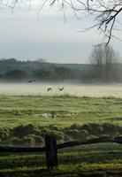 Enten im Nebel foto