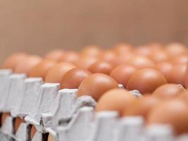 Eier in der Packung schließen foto